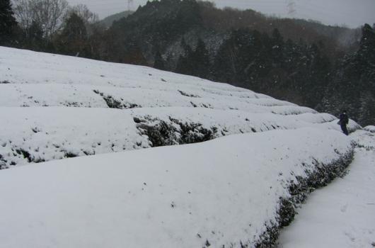冬には雪がどっさりと積もります。