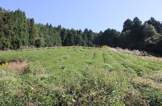 日々雑草を刈り取る作業が必要です。